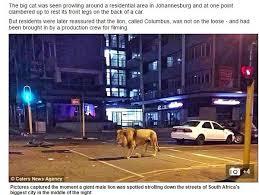 熊本地震 ライオン